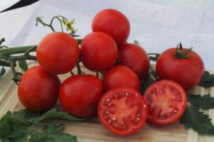 Pomidor Gallant F1 MoravoSeed