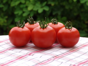 Pomidor Orkado F1 MoravoSeed
